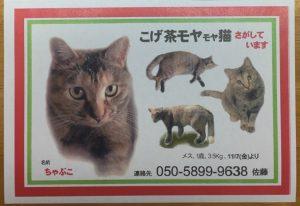 迷い猫捜索チラシの作り方③ 屋外に貼るポスター・チラシを作る