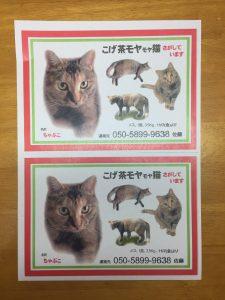 迷い猫捜索用ポスターチラシA5サイズ