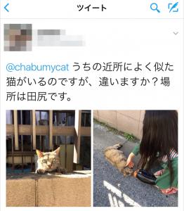 迷い猫探し ツイッターで頂いた情報と画像